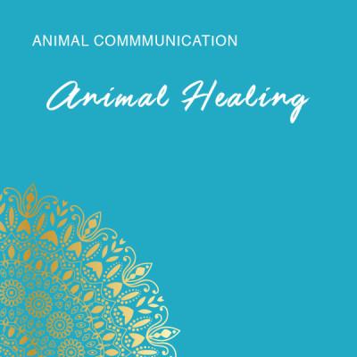 sjstore-animalhealing